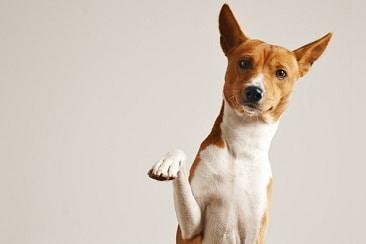 4 סיבות לתת שמן זית כתית מעולה לכלב שלך